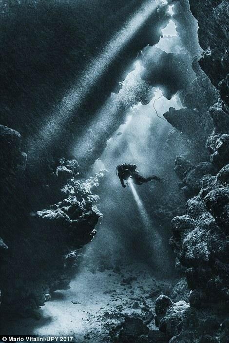 Самые впечатляющие работы конкурса подводной фотографии Underwater Photographer of the Year 2017