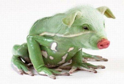 20 фантастических животных гибридов, рожденных фотошопом! Подборка веселых и жутких работ