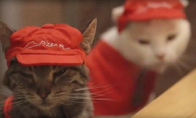 Японские коты продают пиццу: знаменитое видео 2014 года