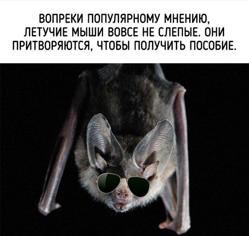 Эти невероятных факты расскажут вам всю правду о животных!