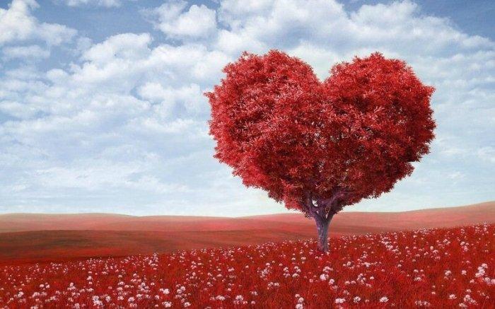 Чихание без сердцебиения: 33 факта о нашем сердце