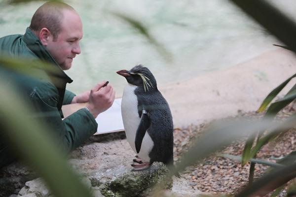 Лондонский зоопарк. Подсчет пингвинов и медуз