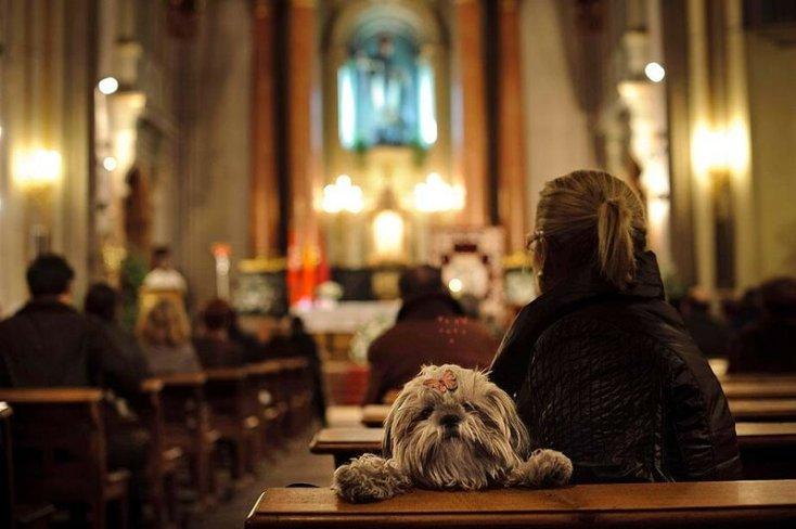Фото, как в Испанской церкви благословляют собак и других домашних животных