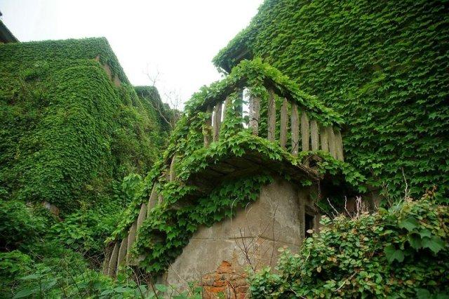 Заросшие растениями дома в Китае в устье реки Янцзы