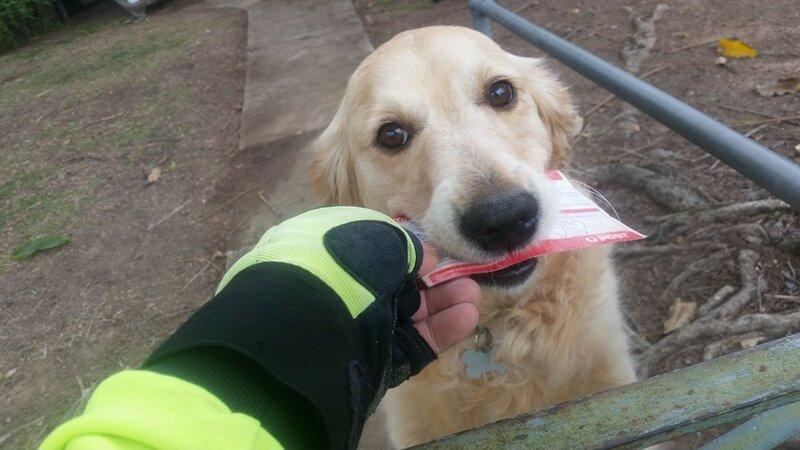 Эта собака расстраивалась, не получая почту, и почтальон начал писать ей письма