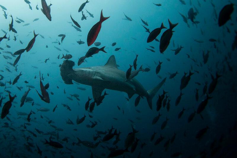 Галапагосские острова, последние райские места Земли