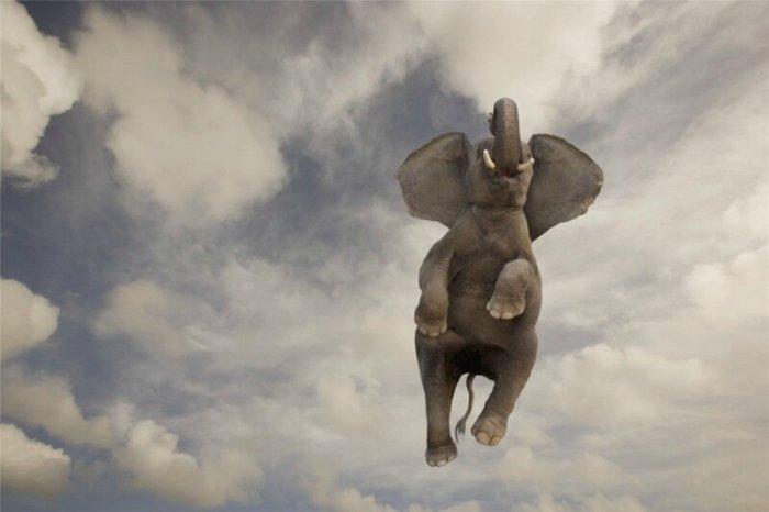 Хобот слона имеет более 4000 мышц
