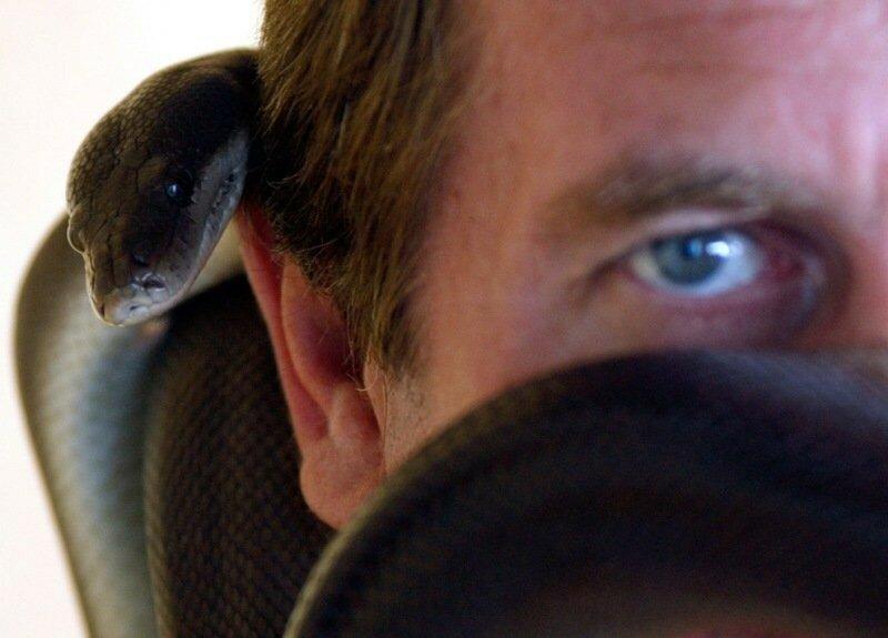 40 фотографий помогут понять, что вы находитесь в мире животных