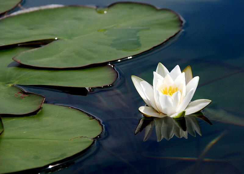 также растения пресноводных водоемов фото открытка