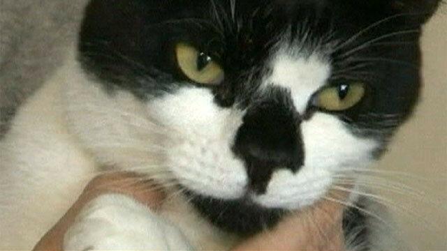 Коты клептоманы: забавно криминальное видео