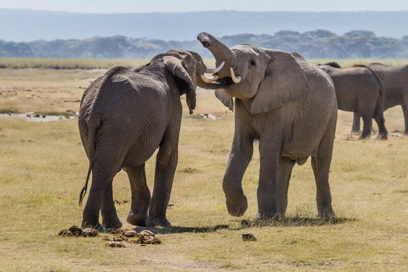 Как животные общаются между собой. Поразительные примеры!