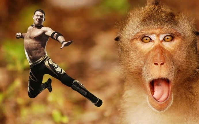 Индийская обезьяна рестлер сбила мужчину с ног на улице