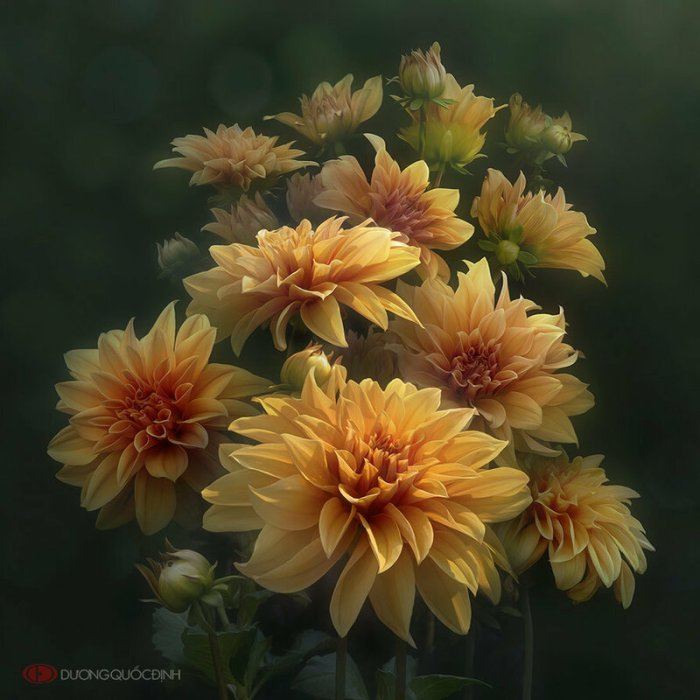 Волшебные цветы Дуонг Куок Динь