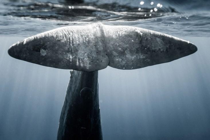 Хвост кита. А на сегодня это все. (Фото Fish Eye Freediving)