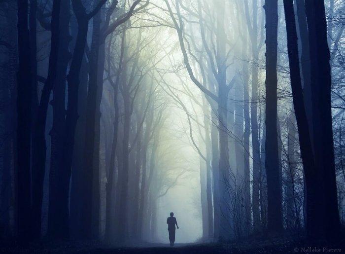 Неллика Петерс. В ожидании рыцаря застыли леса