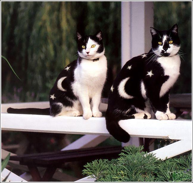 Рестайлинг кошки