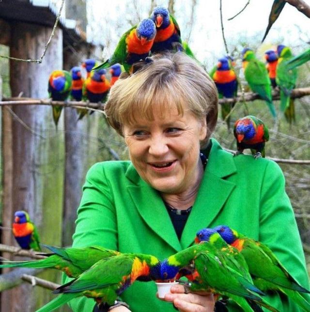 Неожиданные нападения на политиков: насекомым и другим животным закон не писан