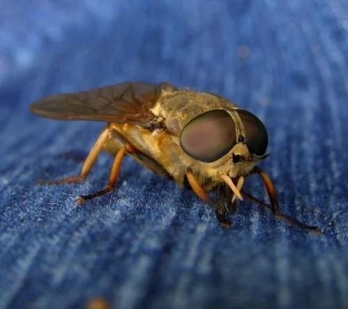 Средство от укуса жалящих насекомых