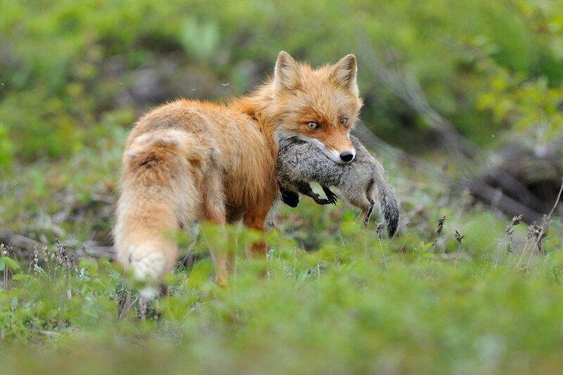 Земные хищники с умопомрачительными способностями