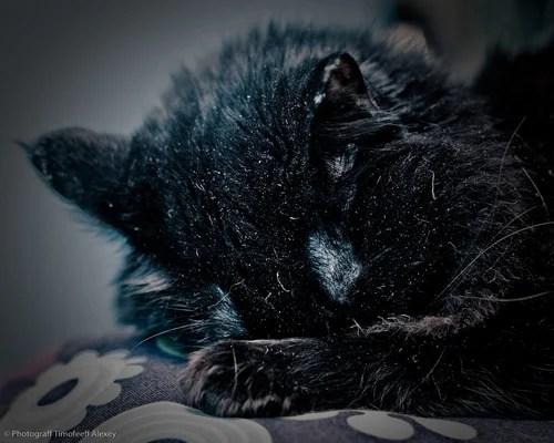 Домашняя фотосессия, фотография, кошки, жиовтные, сон, портрет