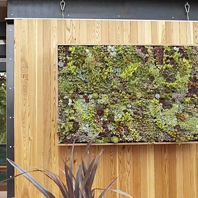 мини-сад из суккулентов зеленый декор