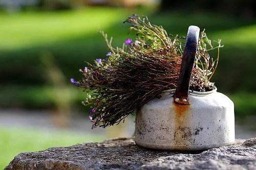 травяной сбор для повышения аппетита