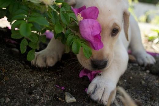 Смешные фотографии собак: милые мордашки, ужимки и серьезные мордочки