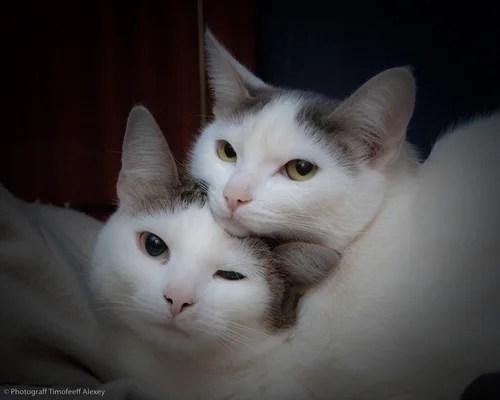 животные, кошки, нежность, портрет, сон, фотография, фотосессия, домашняя