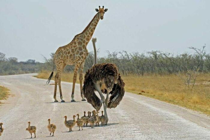 В мире животных: видео заставки передачи, история и фотографии