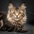 кот, кошка, кошачьи глаза, домашние животные, животные
