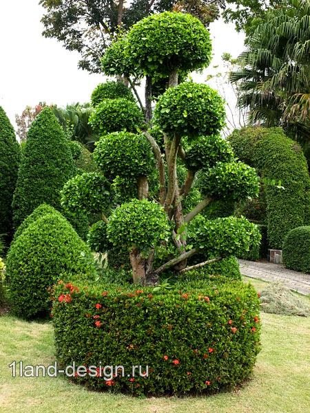 фигурная стрижка деревьев