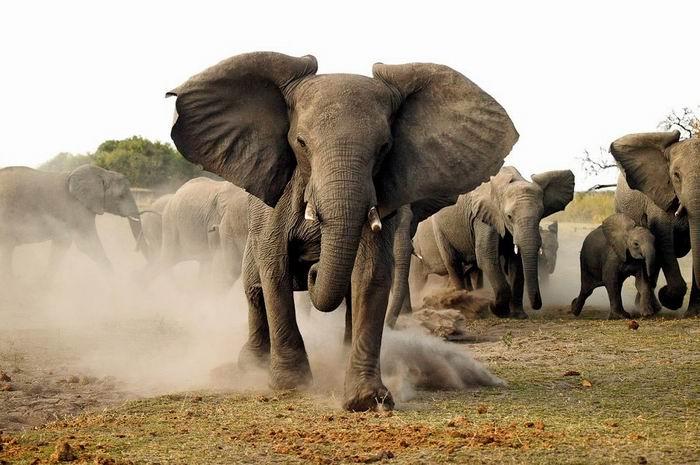 Африка в объективе Michael Poliza. Таинственная и чарующая. 44 фото