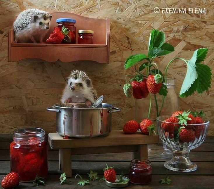 Из жизни ёжиков. Фотограф Елена Еремина