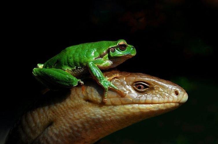 Еще много фотографий подтверждения необычной дружбы в мире животных