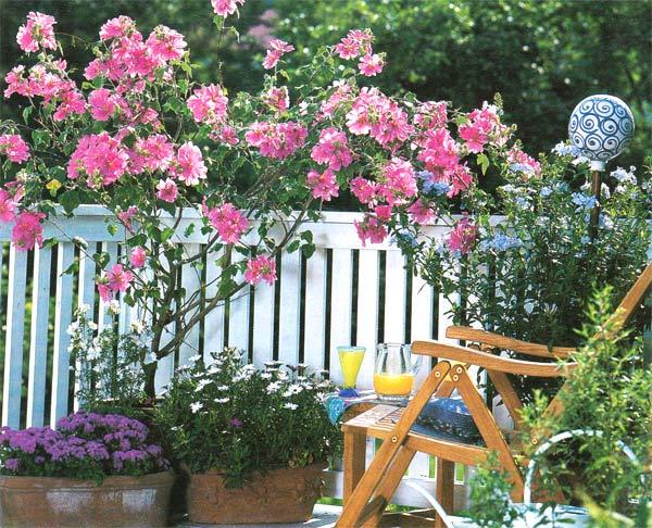 цветущие растения в кадках дизайн террасы