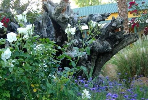 дизайн сада коряга в саду