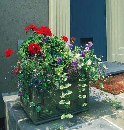 дизайн двора и сада растения цветы в кадках