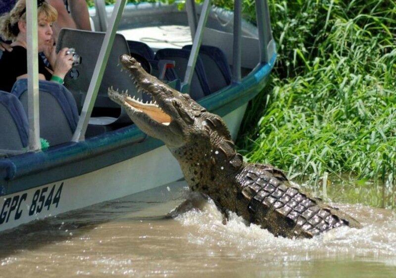 Как посетительница зоопарка прыгнула к крокодилам