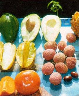 экзотические фрукты вырастить из косточки