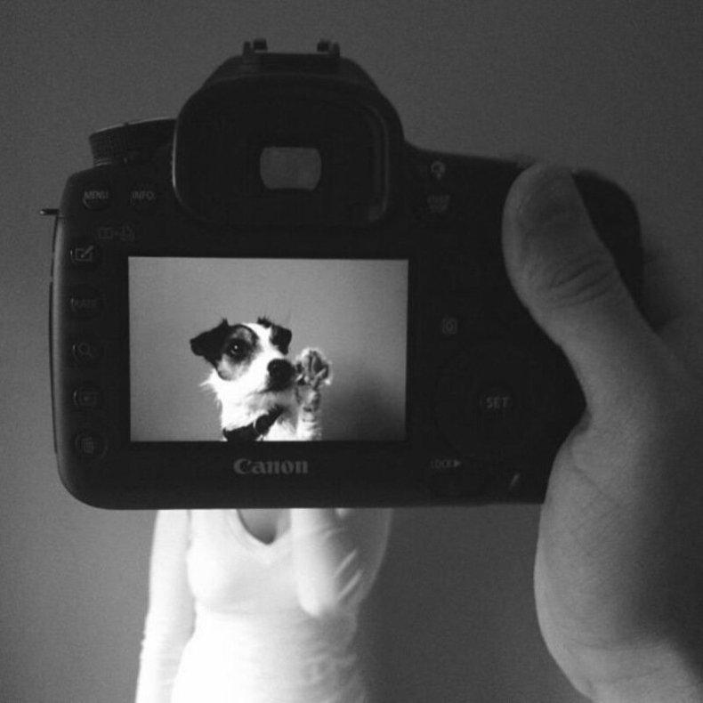 Хозяева плюс домашние животные   это веселые фотографии