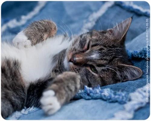 Кошка Иена (В добрые руки)