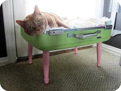 кровать для кошки