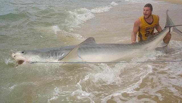 Австралиец поймал акулу голыми руками