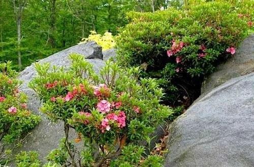 растения на альпийской горке