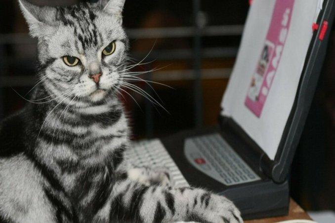 Ваш кот считает вас котом