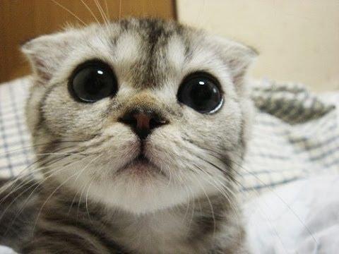 Mata kucing bernanah