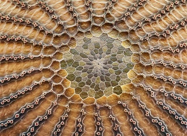 Яйца насекомых под электронным микроскопом: потрясающие фотографии!