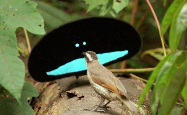 Реально существующие «мифические животные»: райская птица, дракон, вампир и другие