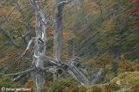 Фотоконкурс Veolia Environnement Wildlife Photographer of the Year 2011