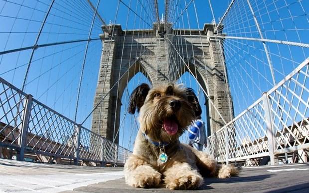 Оскар, пес путешественник, был сбит машиной и погиб